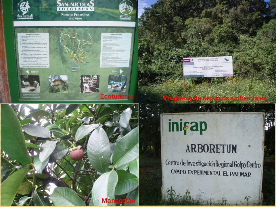 Ecoturismo Mangostán Programa de servicios ambientales