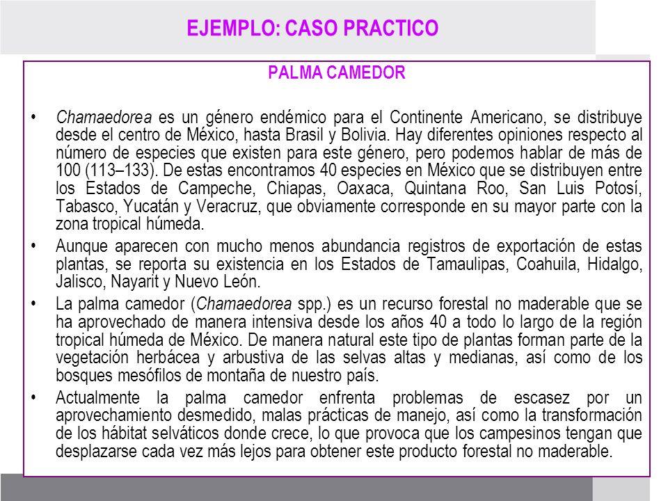 PROCESO DE RENOVACIÓN DE LOS CCDS (2005 – 2007) EJEMPLO: CASO PRACTICO PALMA CAMEDOR Chamaedorea es un género endémico para el Continente Americano, s