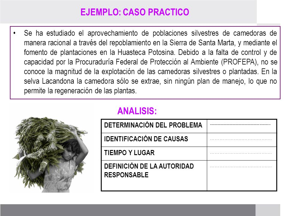 PROCESO DE RENOVACIÓN DE LOS CCDS (2005 – 2007) EJEMPLO: CASO PRACTICO Se ha estudiado el aprovechamiento de poblaciones silvestres de camedoras de ma