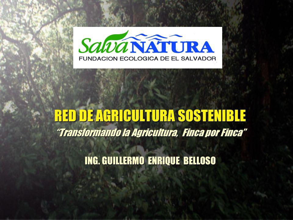 RED DE AGRICULTURA SOSTENIBLE Transformando la Agricultura, Finca por Finca ING. GUILLERMO ENRIQUE BELLOSO