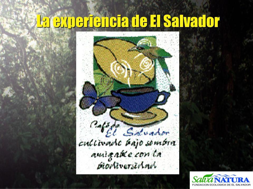 La experiencia de El Salvador