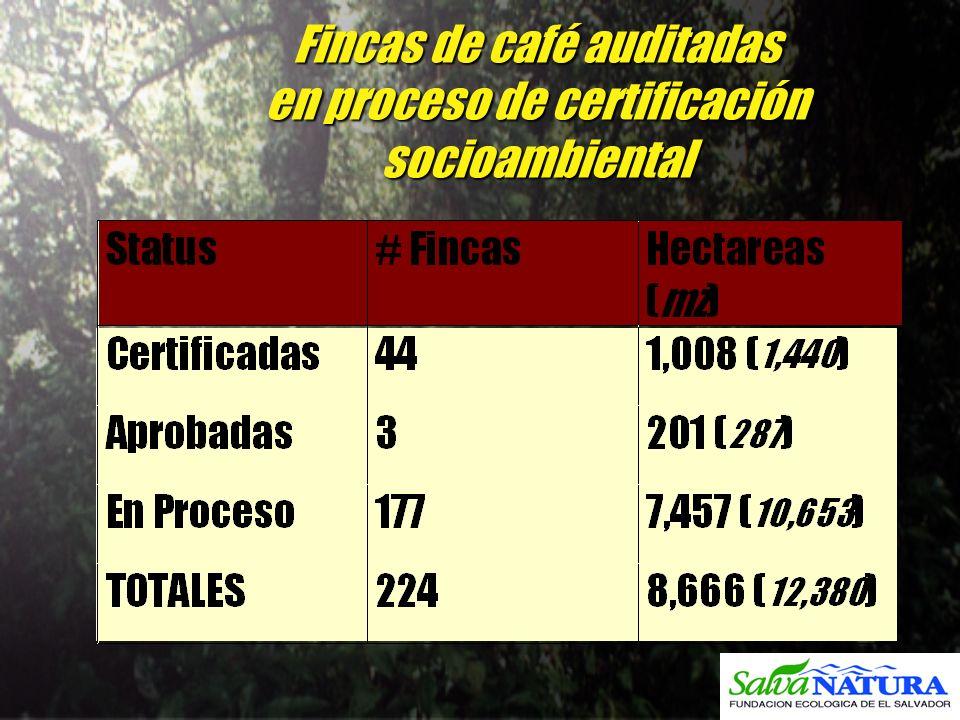Fincas de café auditadas en proceso de certificación socioambiental b