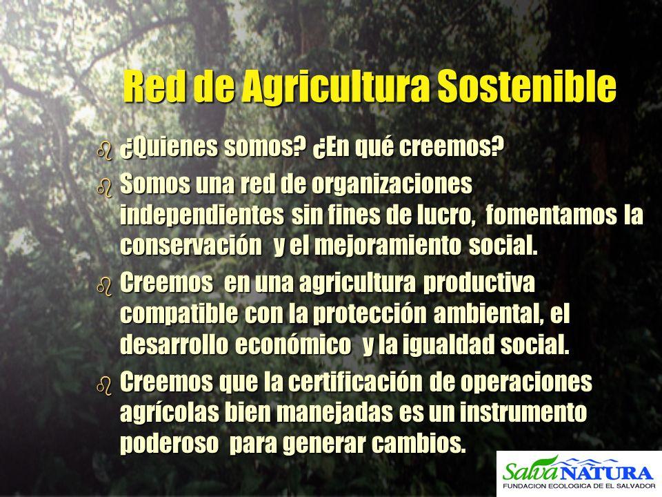 Red de Agricultura Sostenible b ¿Quienes somos? ¿En qué creemos? b Somos una red de organizaciones independientes sin fines de lucro, fomentamos la co