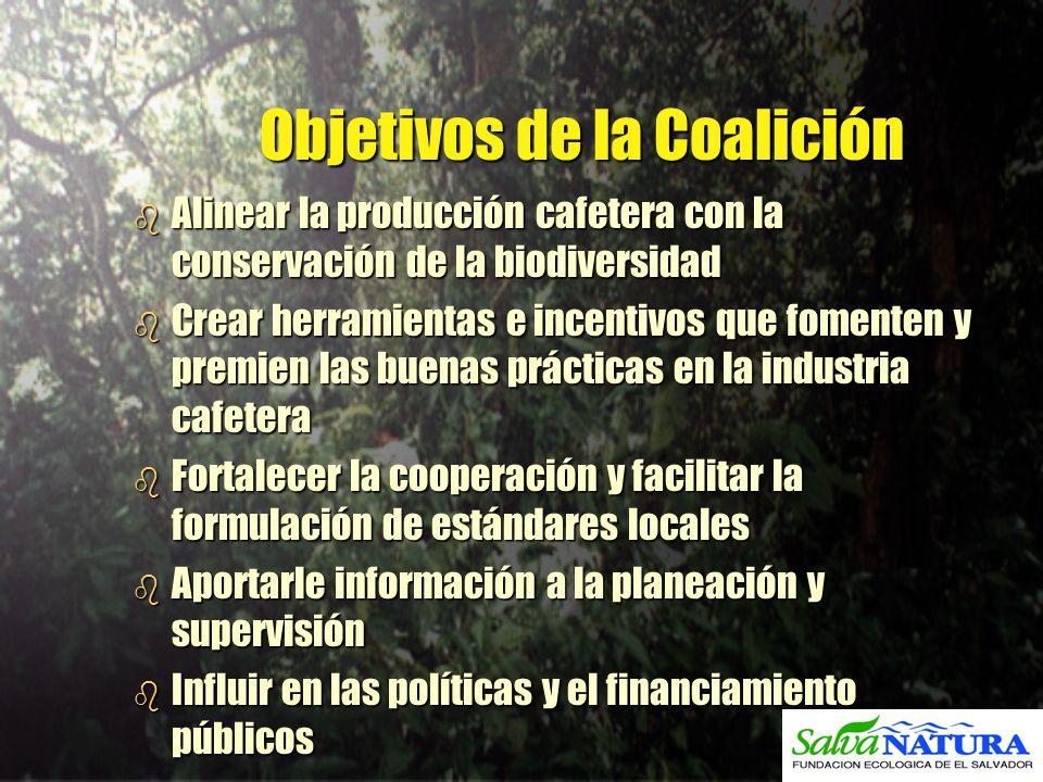 Objetivos de la Coalición b Alinear la producción cafetera con la conservación de la biodiversidad b Crear herramientas e incentivos que fomenten y pr