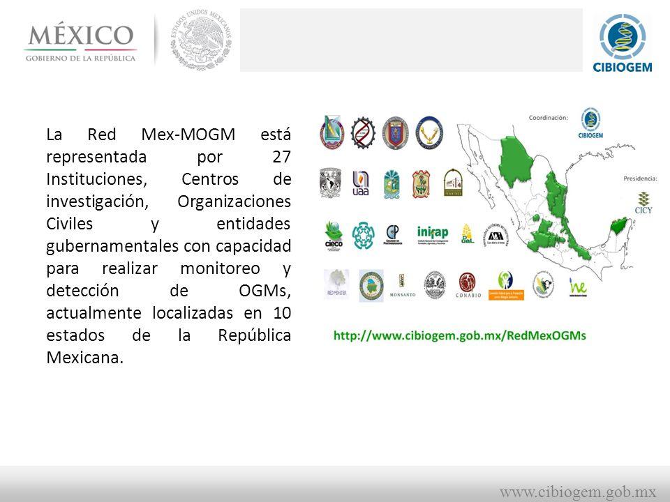 www.cibiogem.gob.mx La Red Mex-MOGM está representada por 27 Instituciones, Centros de investigación, Organizaciones Civiles y entidades gubernamentales con capacidad para realizar monitoreo y detección de OGMs, actualmente localizadas en 10 estados de la República Mexicana.
