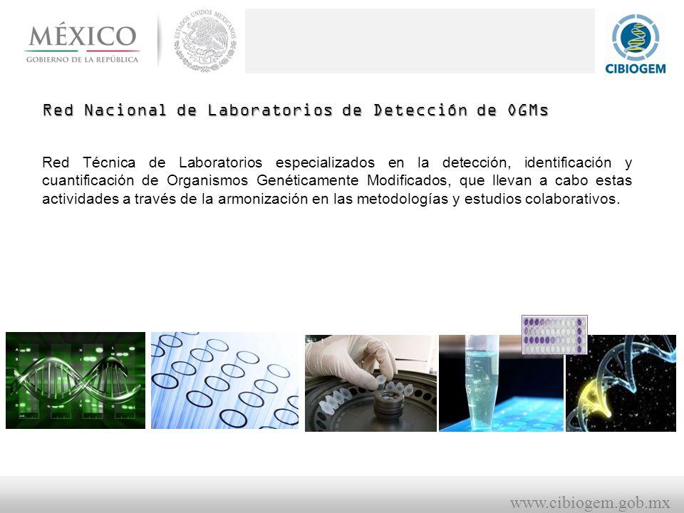 www.cibiogem.gob.mx Red Nacional de Laboratorios de Detección de OGMs Red Técnica de Laboratorios especializados en la detección, identificación y cuantificación de Organismos Genéticamente Modificados, que llevan a cabo estas actividades a través de la armonización en las metodologías y estudios colaborativos.