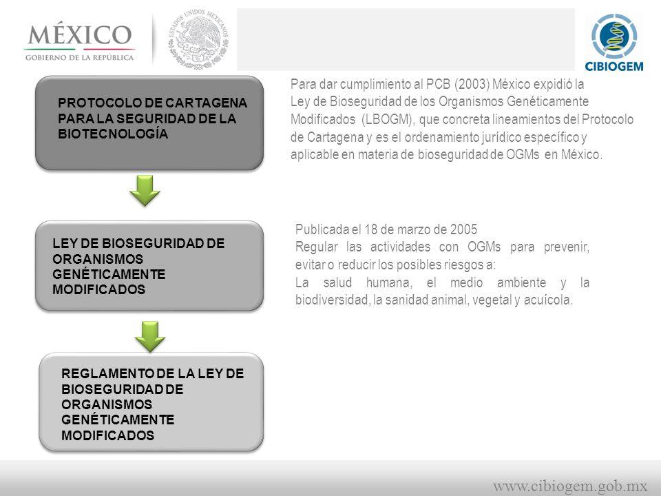 www.cibiogem.gob.mx PROTOCOLO DE CARTAGENA PARA LA SEGURIDAD DE LA BIOTECNOLOGÍA LEY DE BIOSEGURIDAD DE ORGANISMOS GENÉTICAMENTE MODIFICADOS REGLAMENTO DE LA LEY DE BIOSEGURIDAD DE ORGANISMOS GENÉTICAMENTE MODIFICADOS Para dar cumplimiento al PCB (2003) México expidió la Ley de Bioseguridad de los Organismos Genéticamente Modificados (LBOGM), que concreta lineamientos del Protocolo de Cartagena y es el ordenamiento jurídico específico y aplicable en materia de bioseguridad de OGMs en México.