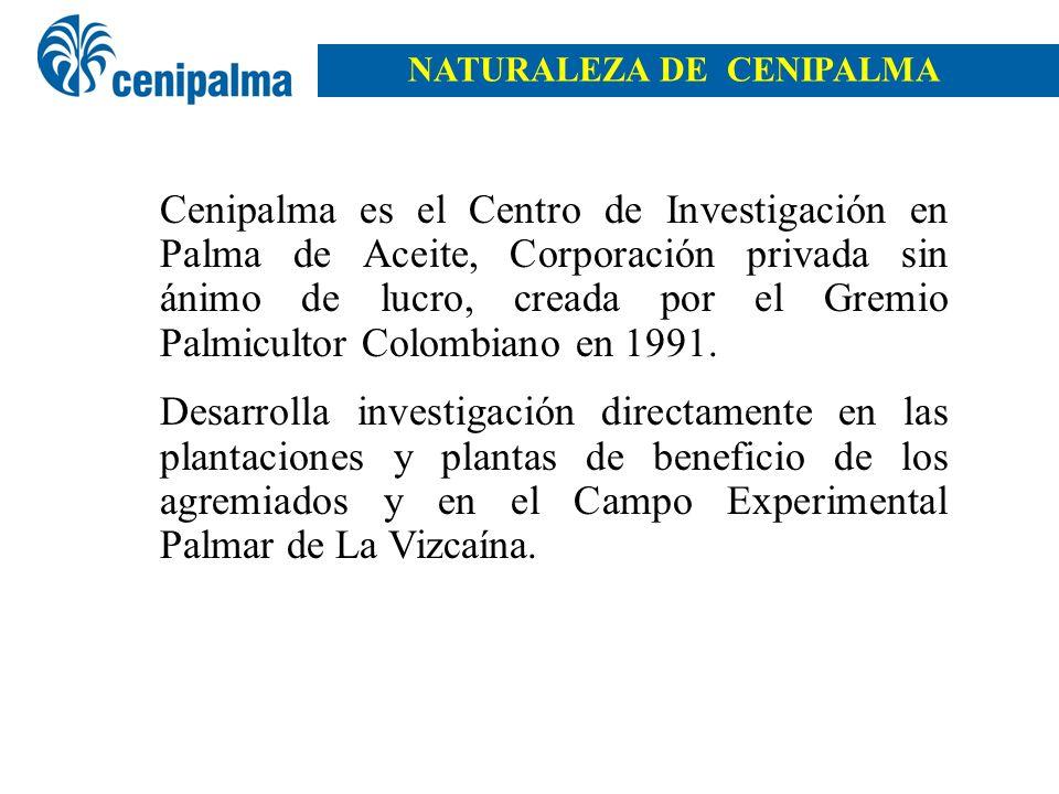 Cenipalma es el Centro de Investigación en Palma de Aceite, Corporación privada sin ánimo de lucro, creada por el Gremio Palmicultor Colombiano en 199