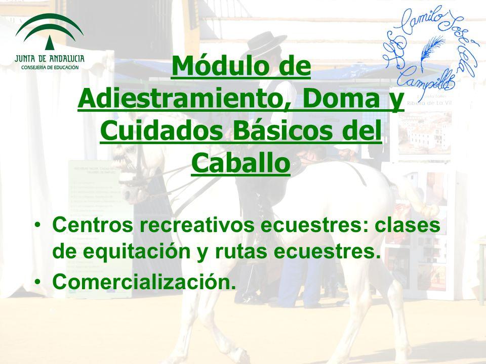 Módulo de Adiestramiento, Doma y Cuidados Básicos del Caballo Centros recreativos ecuestres: clases de equitación y rutas ecuestres.