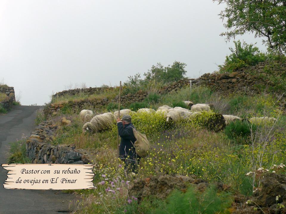 Oquedades en forma de pozos o aljibes, donde los aborígenes mantenían el agua para su abastecimiento, éste situado en Tefirabe, parte alta de Valverde