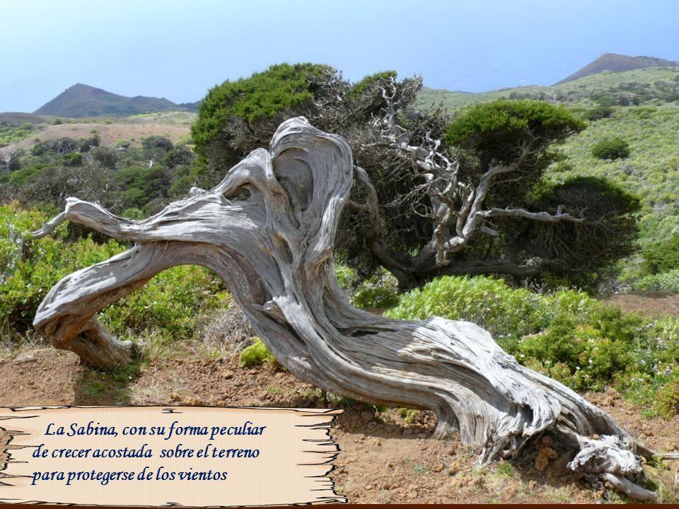 En este lugar se encontraba el árbol Santo que fue derribado por un huracán en el año 1610, en su lugar a mediados del siglo XX se planto éste tilo, e
