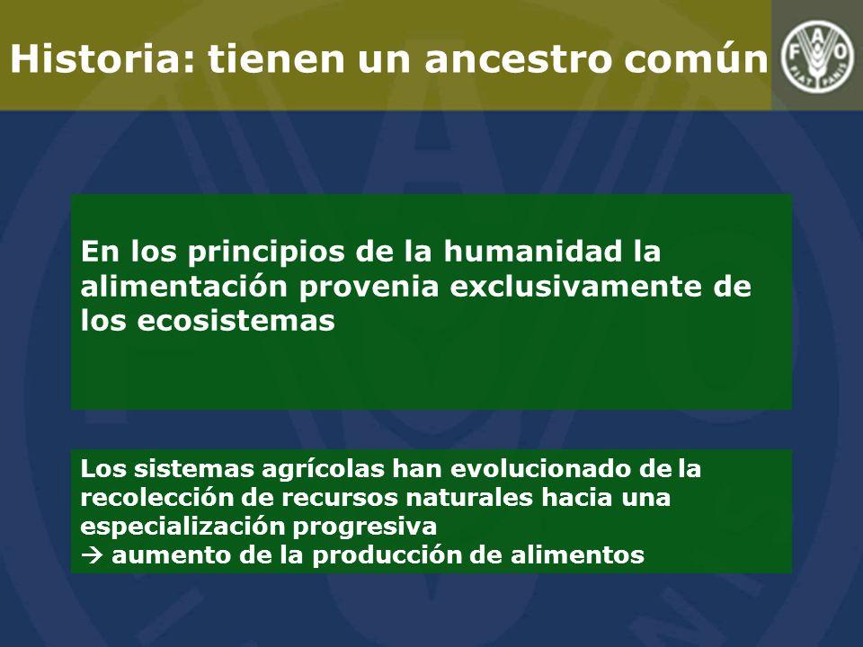 Historia: tienen un ancestro común Los sistemas agrícolas han evolucionado de la recolección de recursos naturales hacia una especialización progresiva aumento de la producción de alimentos En los principios de la humanidad la alimentación provenia exclusivamente de los ecosistemas