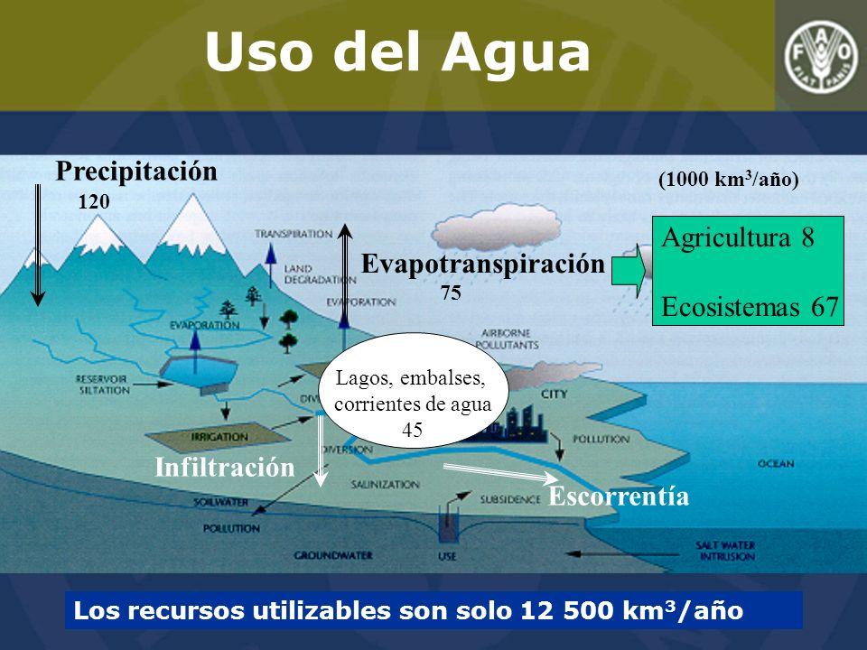 Escorrentía Infiltración Precipitación 120 (1000 km 3 /año) Evapotranspiración 75 Lagos, embalses, corrientes de agua 45 Los recursos utilizables son solo 12 500 km 3 /año Agricultura 8 Ecosistemas 67 Uso del Agua
