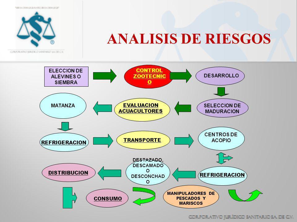 ANALISIS DE RIESGOS ELECCION DE ALEVINES O SIEMBRA CONTROL ZOOTECNIC O DESARROLLO SELECCION DE MADURACION TRANSPORTE EVALUACION ACUACULTORES MATANZA CENTROS DE ACOPIO REFRIGERACION DESTAZADO, DESCAMADO O DESCONCHAD O DISTRIBUCION CONSUMO MANIPULADORES DE PESCADOS Y MARISCOS REFRIGERACION