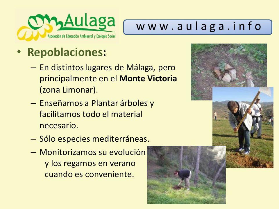 Repoblaciones: – En distintos lugares de Málaga, pero principalmente en el Monte Victoria (zona Limonar). – Enseñamos a Plantar árboles y facilitamos