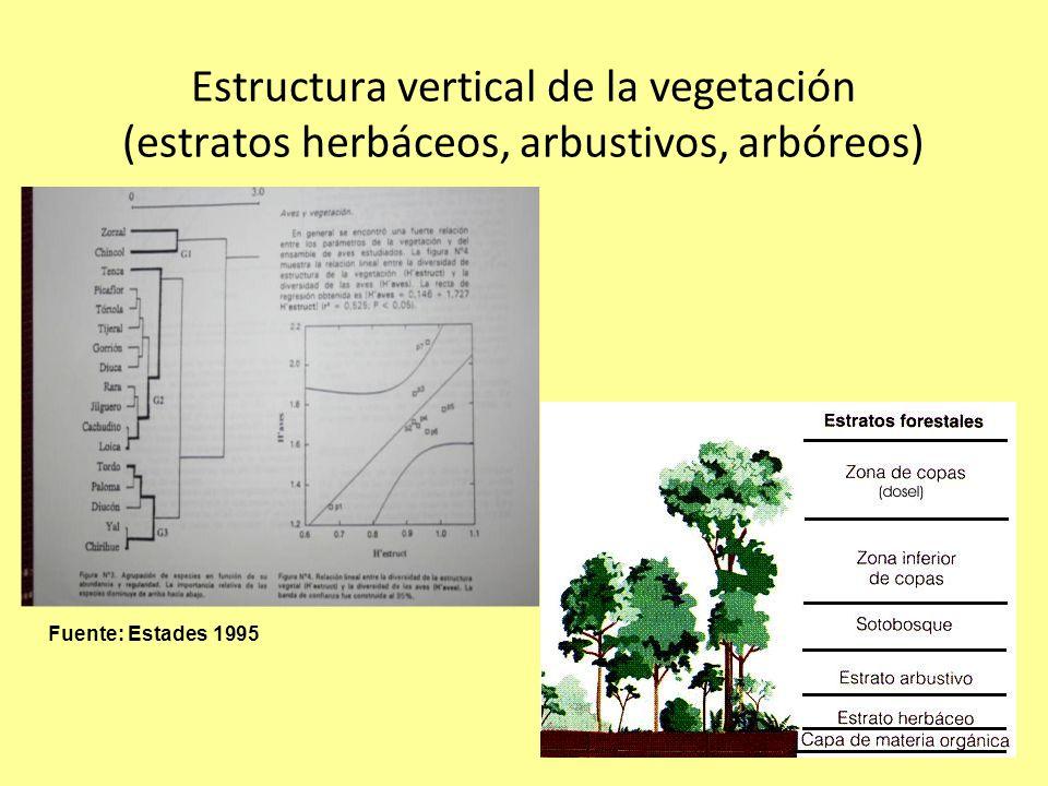 Estructura vertical de la vegetación (estratos herbáceos, arbustivos, arbóreos) Fuente: Estades 1995