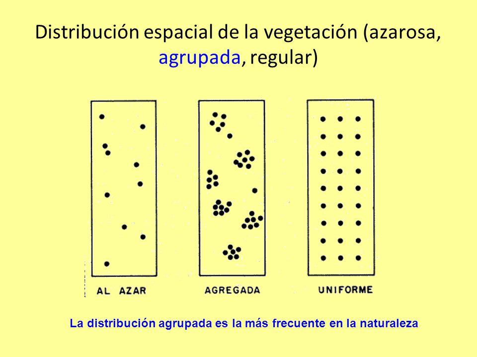 Distribución espacial de la vegetación (azarosa, agrupada, regular) La distribución agrupada es la más frecuente en la naturaleza