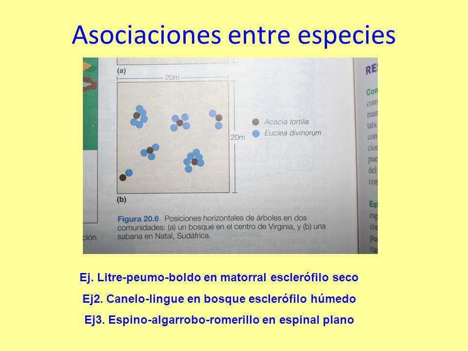 Asociaciones entre especies Ej.Litre-peumo-boldo en matorral esclerófilo seco Ej2.