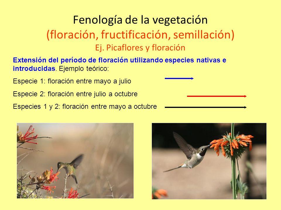 Fenología de la vegetación (floración, fructificación, semillación) Ej.