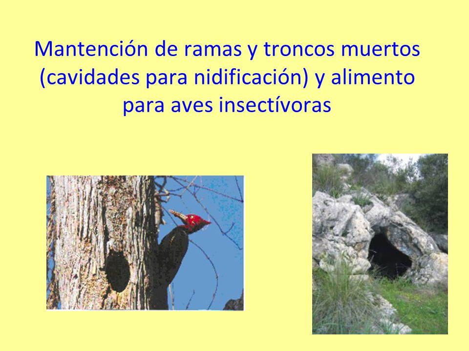 Mantención de ramas y troncos muertos (cavidades para nidificación) y alimento para aves insectívoras