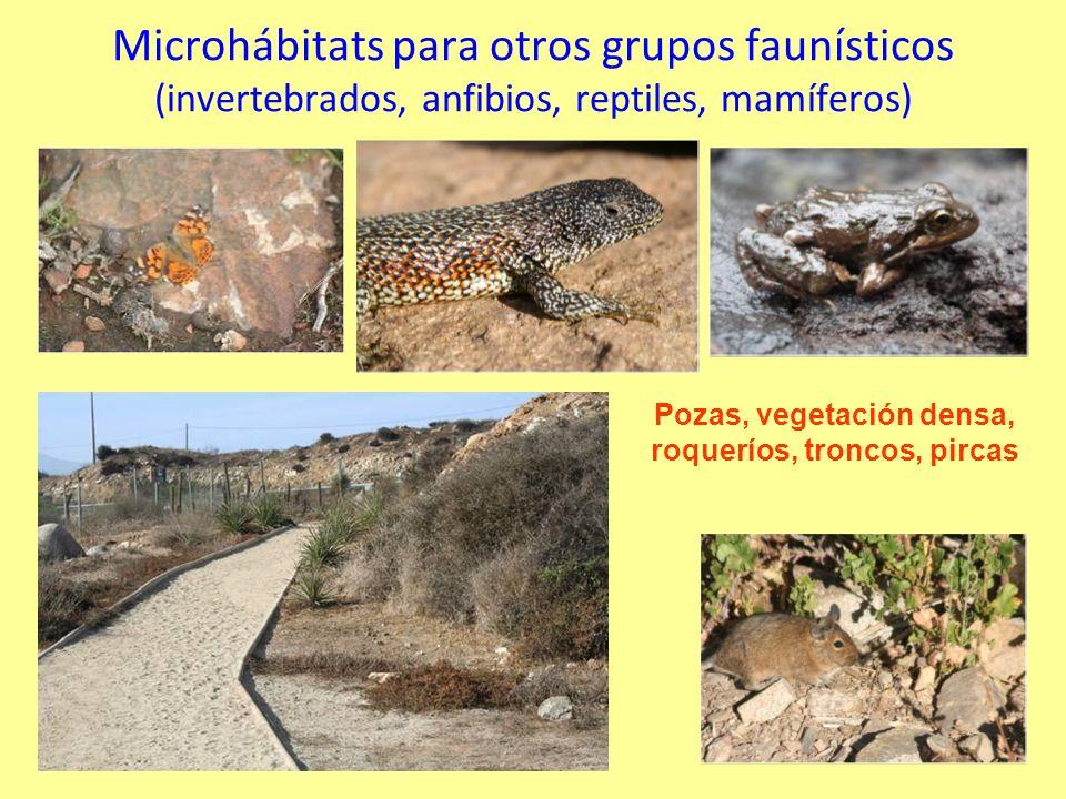 Microhábitats para otros grupos faunísticos (invertebrados, anfibios, reptiles, mamíferos) Pozas, vegetación densa, roqueríos, troncos, pircas