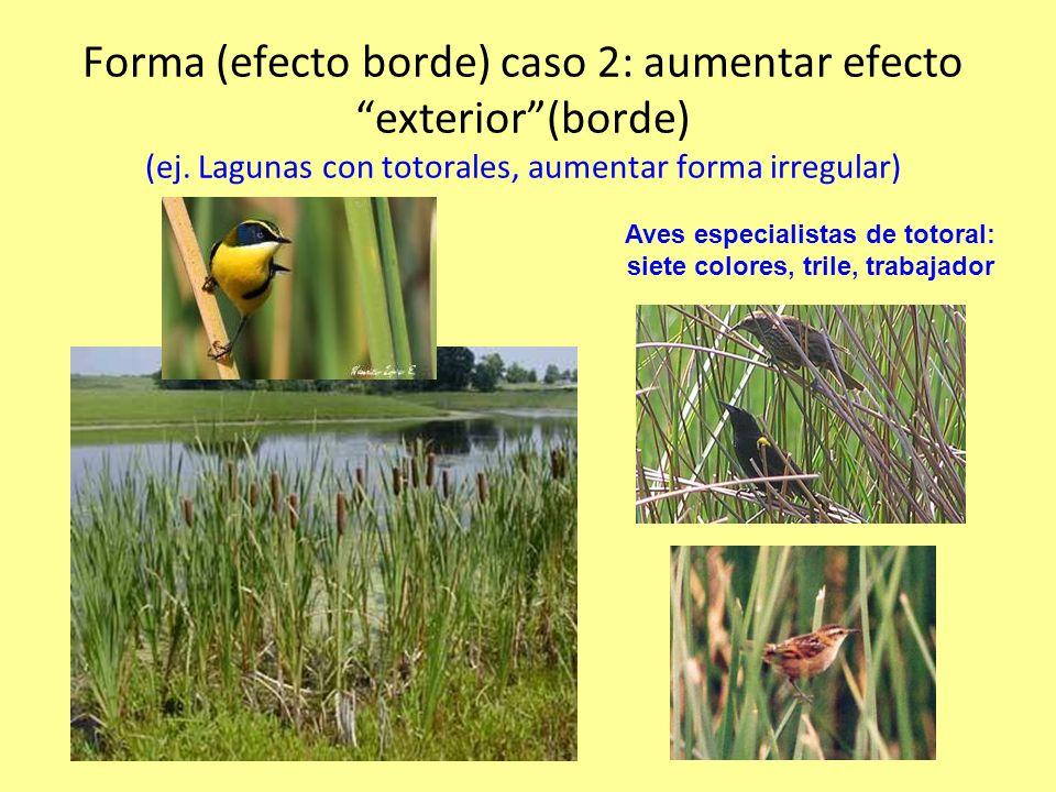 Forma (efecto borde) caso 2: aumentar efecto exterior(borde) (ej.