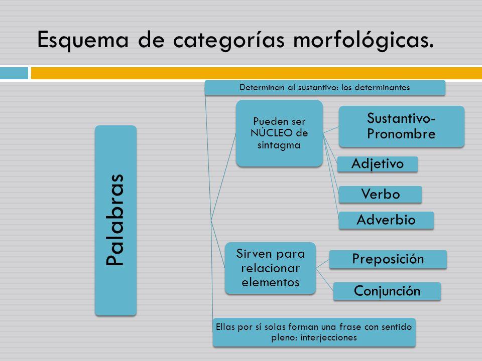 Esquema de categorías morfológicas. Palabras Pueden ser NÚCLEO de sintagma Sustantivo- Pronombre Adjetivo Verbo Adverbio Sirven para relacionar elemen