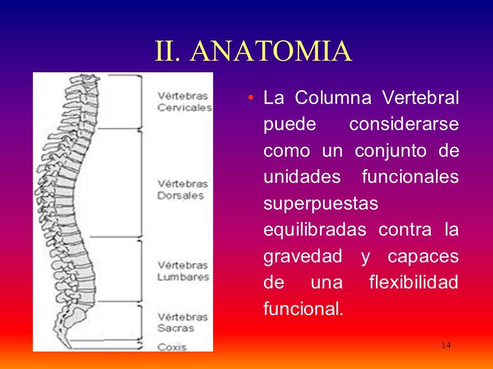 14 II. ANATOMIA La Columna Vertebral puede considerarse como un conjunto de unidades funcionales superpuestas equilibradas contra la gravedad y capace