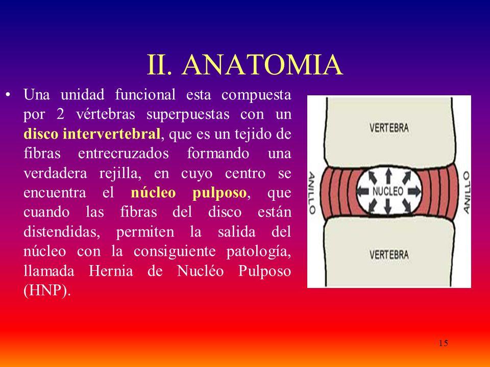 15 II. ANATOMIA Una unidad funcional esta compuesta por 2 vértebras superpuestas con un disco intervertebral, que es un tejido de fibras entrecruzados