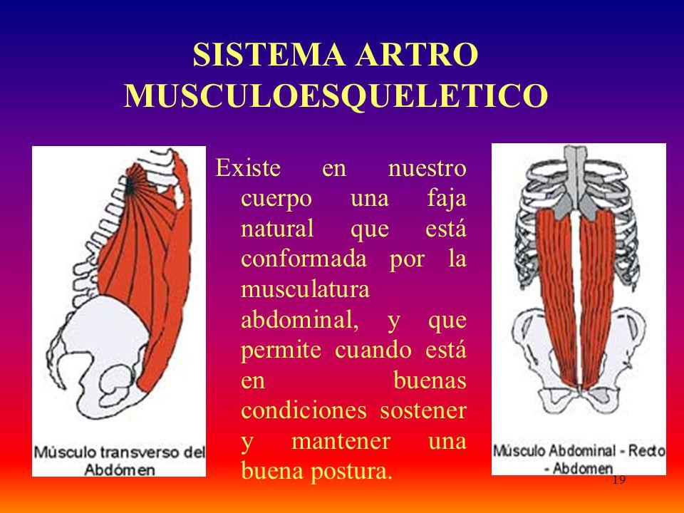 19 SISTEMA ARTRO MUSCULOESQUELETICO Existe en nuestro cuerpo una faja natural que está conformada por la musculatura abdominal, y que permite cuando e