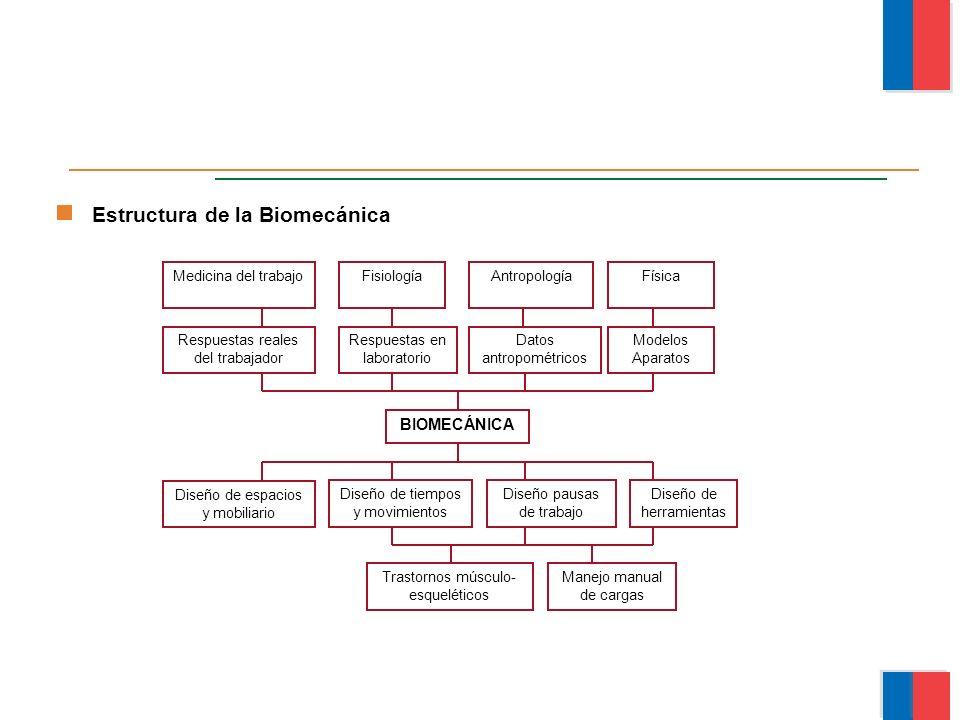 Estructura de la Biomecánica Medicina del trabajoFisiologíaAntropologíaFísica Respuestas reales del trabajador Respuestas en laboratorio Datos antropo