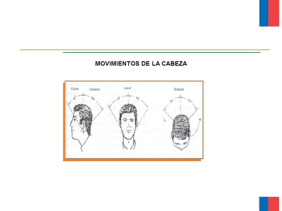 MOVIMIENTOS DE LA CABEZA Módulo Ergonomía Básica