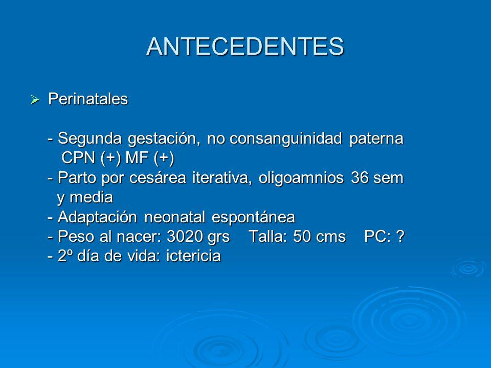 ANTECEDENTES Patológicos Patológicos - 1er mes de vida RGE: plasil - 1er mes de vida RGE: plasil - 2º mes de vida posterior a aplicación de DPT, - 2º mes de vida posterior a aplicación de DPT, neumococo: emesis, cianosis: RGE G III neumococo: emesis, cianosis: RGE G III - Inmunizaciones: completas - Inmunizaciones: completas - Tóxicos, traumáticos, transfusionales: negativos - Tóxicos, traumáticos, transfusionales: negativos - Alérgicos: espinacas: brote - Alérgicos: espinacas: brote