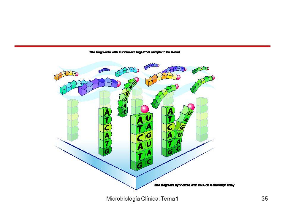 Microbiología Clínica: Tema 135