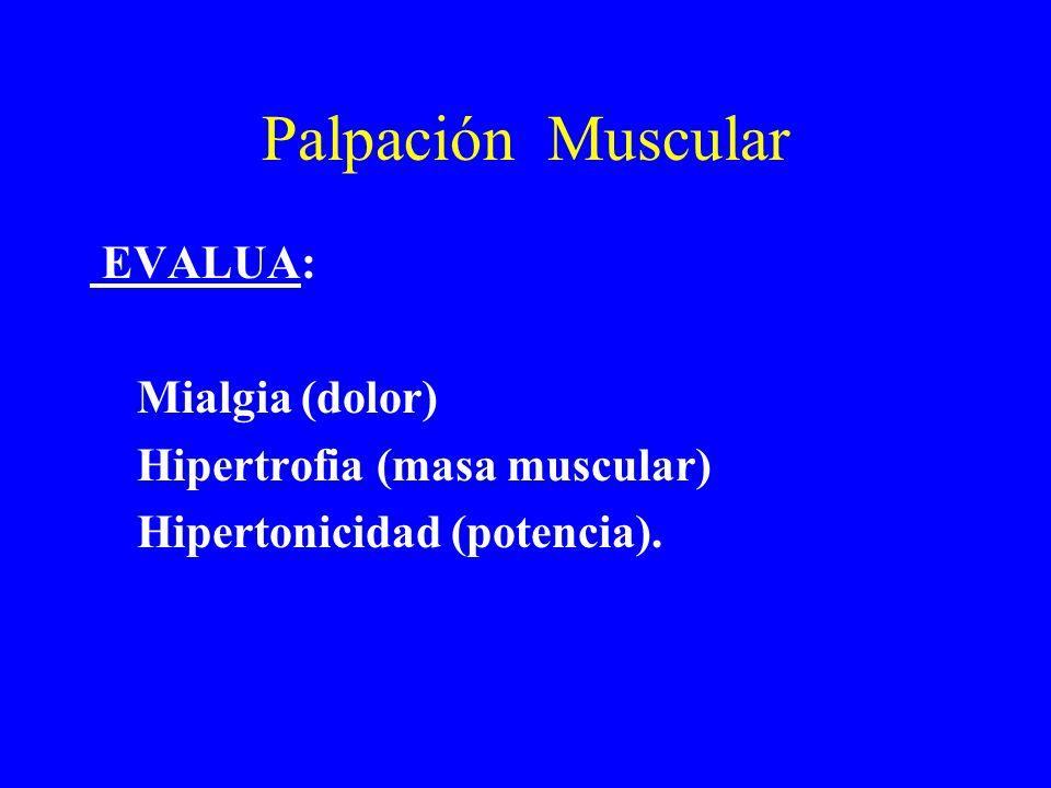Palpación Articular y Muscular CARACTERÍSTICAS Debajo del umbral doloroso. Bilateral. Estática y función.