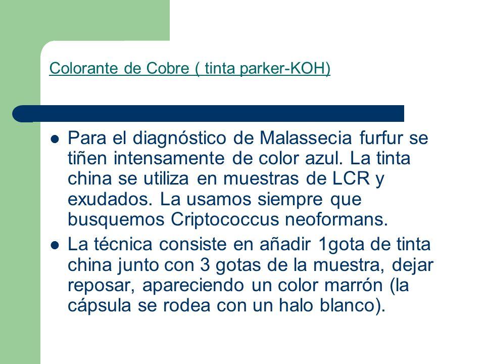 Colorante de Cobre ( tinta parker-KOH) Para el diagnóstico de Malassecia furfur se tiñen intensamente de color azul. La tinta china se utiliza en mues
