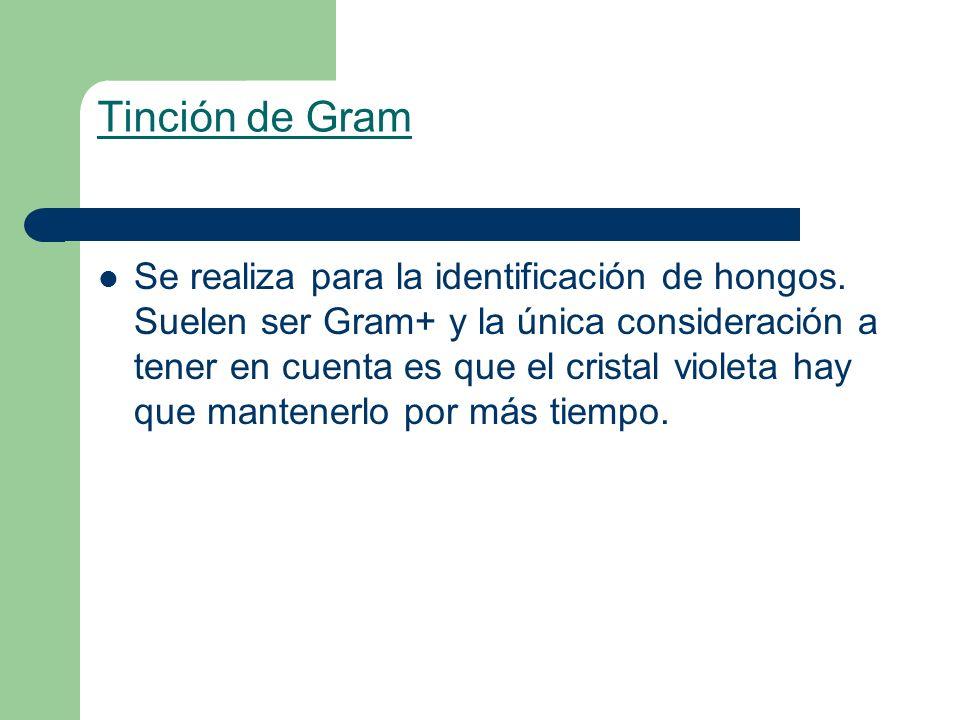 Tinción de Gram Se realiza para la identificación de hongos. Suelen ser Gram+ y la única consideración a tener en cuenta es que el cristal violeta hay