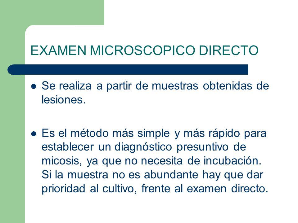 EXAMEN MICROSCOPICO DIRECTO Se realiza a partir de muestras obtenidas de lesiones. Es el método más simple y más rápido para establecer un diagnóstico