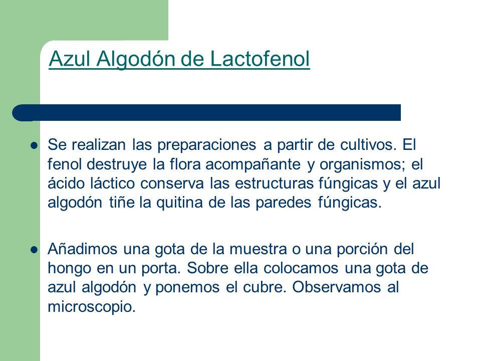 Azul Algodón de Lactofenol Se realizan las preparaciones a partir de cultivos. El fenol destruye la flora acompañante y organismos; el ácido láctico c