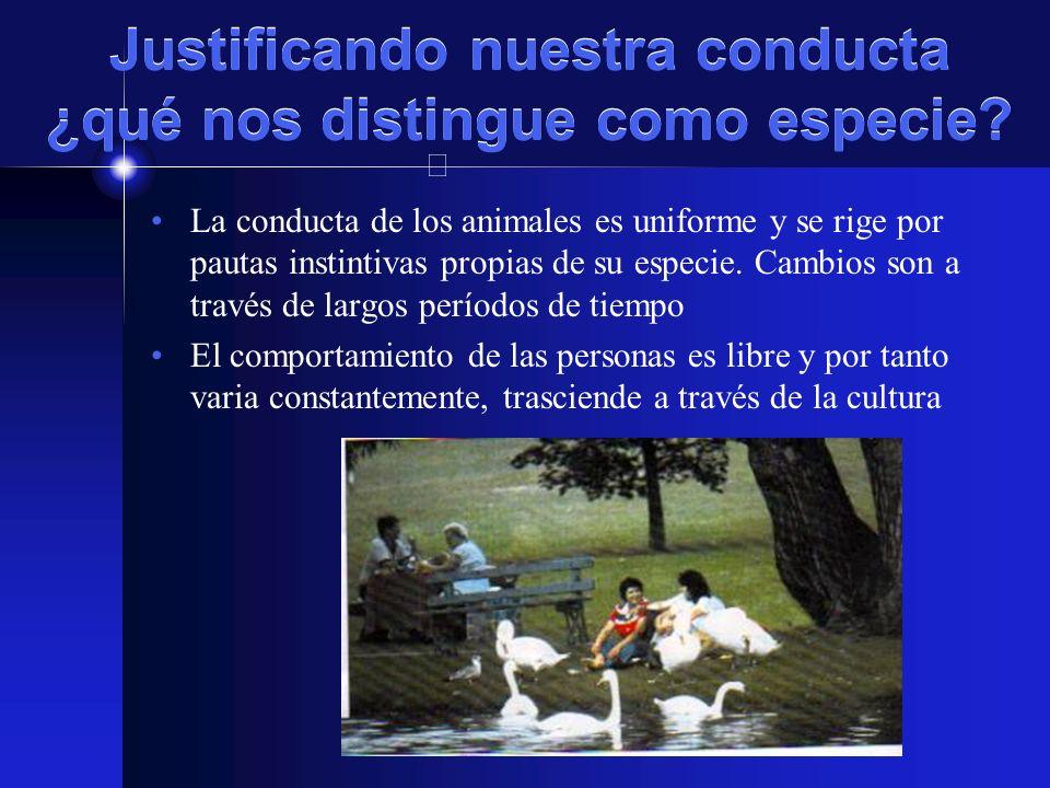 MARCO HISTÓRICO (1972) 1975-San Cugat del Valles (España) 1976-Montreal (Canadá) 1983-Lovaina (Bélgica) 1985-Maastrich (Holanda) 1900-América Latina y el Caribe