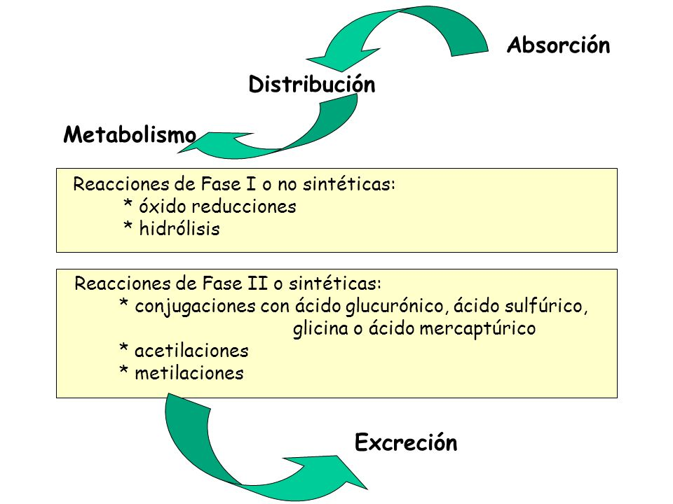 Metabolismo Reacciones de Fase I o no sintéticas: * óxido reducciones * hidrólisis Reacciones de Fase II o sintéticas: * conjugaciones con ácido glucu