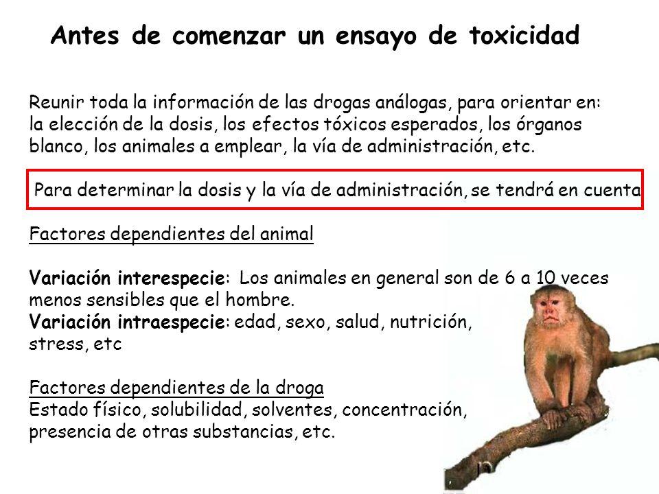 Antes de comenzar un ensayo de toxicidad Reunir toda la información de las drogas análogas, para orientar en: la elección de la dosis, los efectos tóx