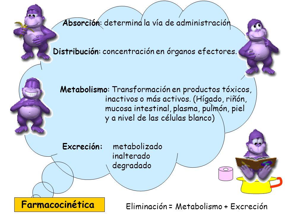 Absorción: determina la vía de administración Distribución: concentración en órganos efectores. Metabolismo: Transformación en productos tóxicos, inac