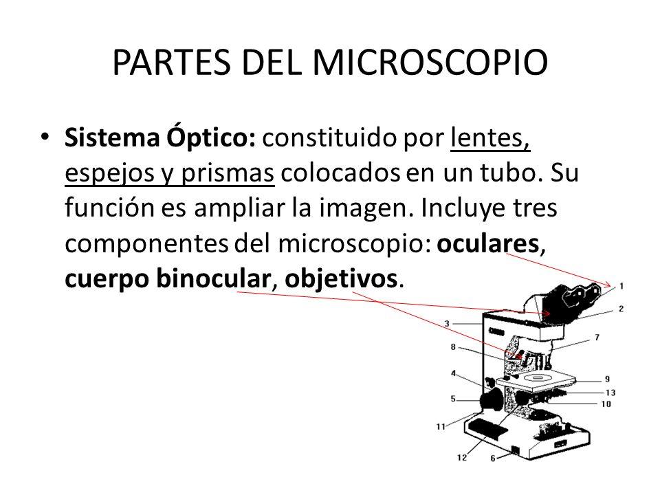 PARTES DEL MICROSCOPIO Sistema Óptico: constituido por lentes, espejos y prismas colocados en un tubo. Su función es ampliar la imagen. Incluye tres c