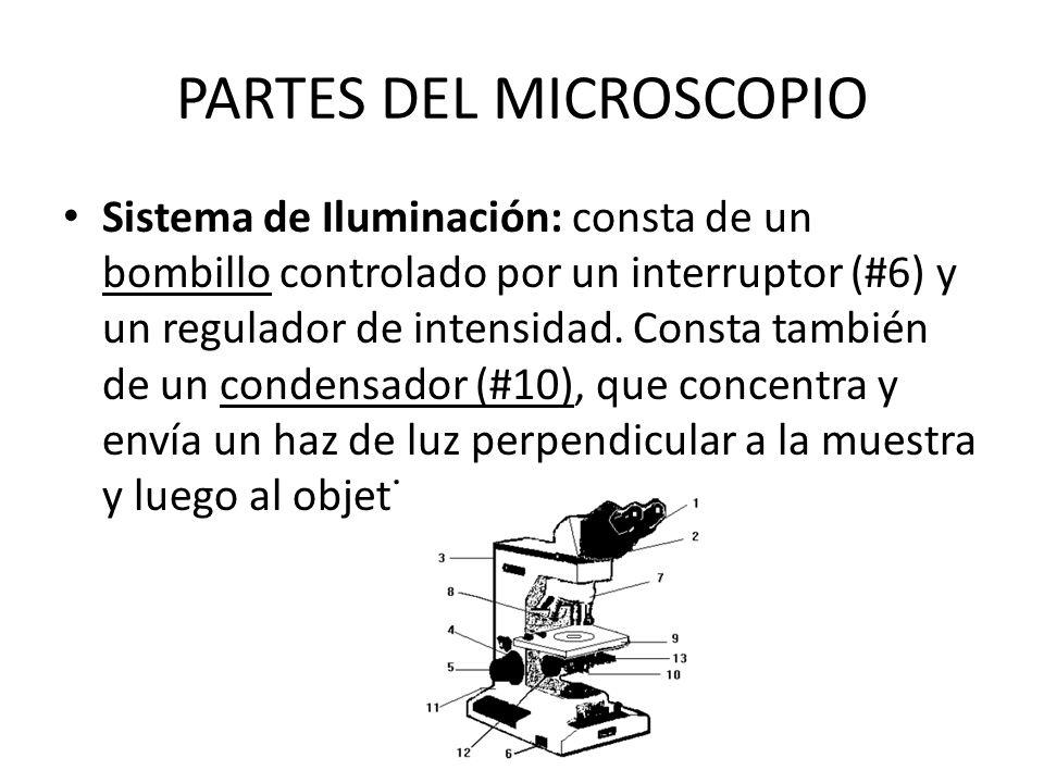 PARTES DEL MICROSCOPIO Sistema de Iluminación: consta de un bombillo controlado por un interruptor (#6) y un regulador de intensidad. Consta también d