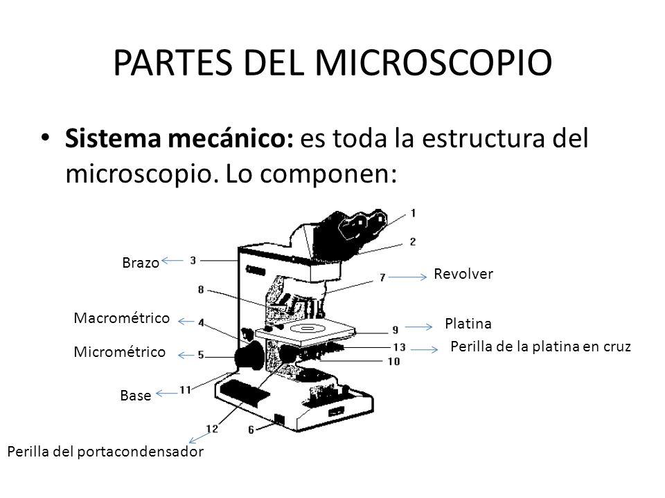 PARTES DEL MICROSCOPIO Sistema mecánico: es toda la estructura del microscopio. Lo componen: Revolver Base Macrométrico Micrométrico Platina Perilla d