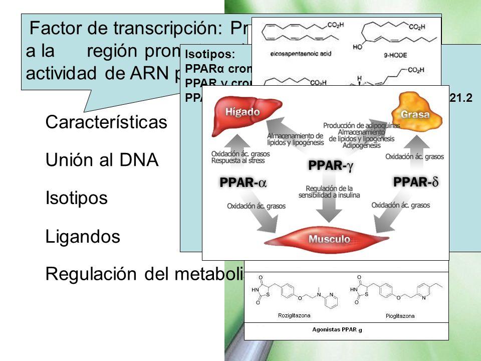 PPAR peroxisome proliferator-activated receptor, PPAR Factor de transcripción: Proteínas que se unen a la región promotora de un gen y estimula la act