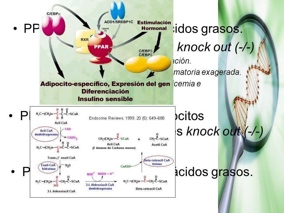 PPARα Metabolismo de ácidos grasos. Experiencias ratas knock out (-/-) No expresan enzimas β-oxidación. LPS respuesta inflamatoria exagerada. Intolera