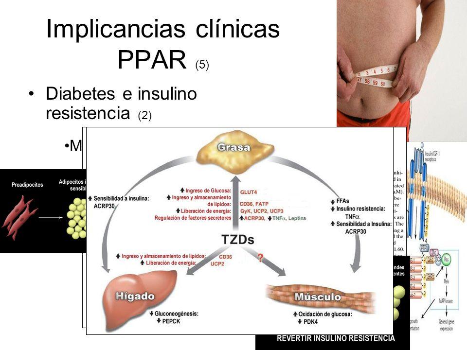 Mecanismos hipoglicémicos de TZD Implicancias clínicas PPAR (5) Diabetes e insulino resistencia (2)