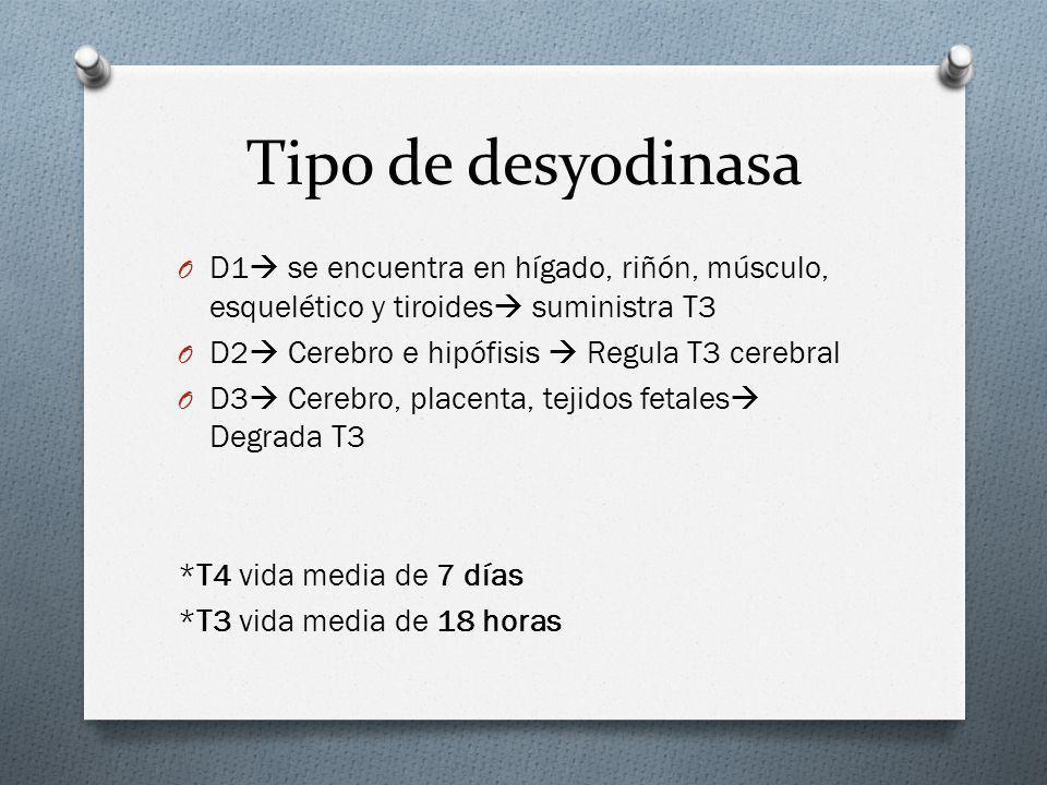 Tipo de desyodinasa O D1 se encuentra en hígado, riñón, músculo, esquelético y tiroides suministra T3 O D2 Cerebro e hipófisis Regula T3 cerebral O D3